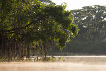 Brazil, Mato Grosso, The Pantanal, Rio Cuiaba by Danita Delimont