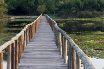 Brazil, Mato Grosso, The Pantanal, Porto Jofre, giant lily pads, by Danita Delimont