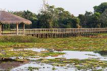 Brazil, Mato Grosso, The Pantanal, Porto Jofre, giant lily pads, von Danita Delimont