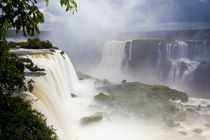Iguacu Falls, Cataratta Foz do Iguacu, Parana, Iguazu N von Danita Delimont