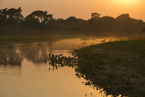 Sunrise on Cuiaba River, Northern Pantanal, Mato Grosso, Brazil by Danita Delimont