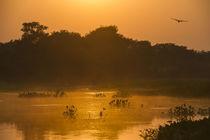 Sunrise on Cuiaba River, Northern Pantanal, Mato Grosso, Brazil by Danita Delimont