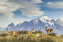 South America, Chile, Patagonia, Torres del Paine von Danita Delimont