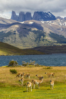 South America, Chile, Patagonia, Torres del Paine National Park von Danita Delimont