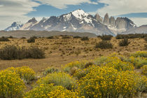 South America, Chile, Patagonia by Danita Delimont