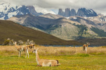South America, Chile, Patagonia, Torres del Paine National Park by Danita Delimont