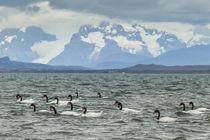 South America, Chile, Patagonia, Ultima Esperanza Sound von Danita Delimont