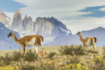 South America, Chile, Patagonia, Torres del Paine by Danita Delimont