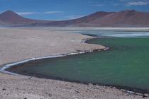 Green Lagoon, Atacama desert von Danita Delimont