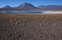 Miniques Lake, Altiplano of Northern Chile von Danita Delimont