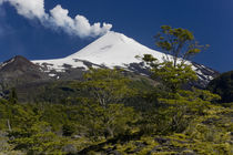 Villarrica National Park, Chile by Danita Delimont