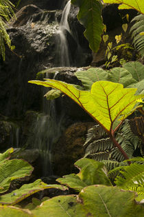 Plant detail at a botanical garden, Quito, Ecuador. von Danita Delimont
