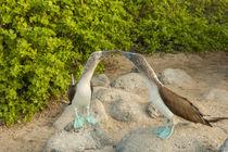 Ecuador, Galapagos National Park, San Cristobal von Danita Delimont