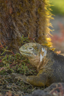 Ecuador, Galapagos National Park by Danita Delimont