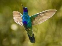 Ecuador, Galapagos National Park, Nono by Danita Delimont