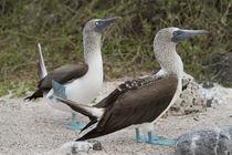 Ecuador, Galapagos, North Seymour von Danita Delimont