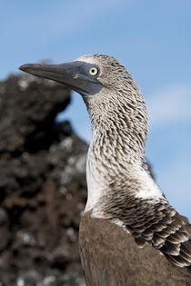 Ecuador, Galapagos, Santa Cruz Island, Black Turtle Cove by Danita Delimont