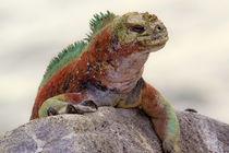 Galapagos von Danita Delimont
