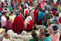 Zumbahua animal market, Ecuador by Danita Delimont