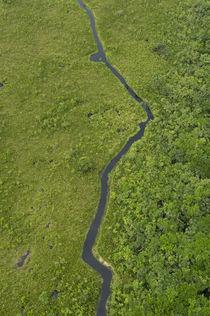 Blackwater swamp by Danita Delimont