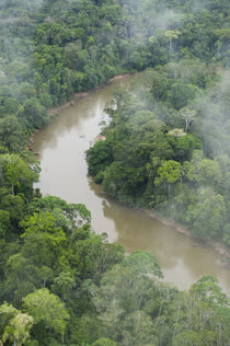 Tiputini River and Rainforest von Danita Delimont