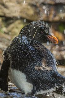 Falkland Islands, Saunders Island von Danita Delimont
