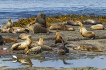 Falkland Islands, Bleaker Island von Danita Delimont