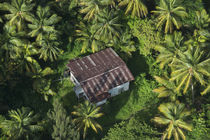 Coconut Palms by Danita Delimont