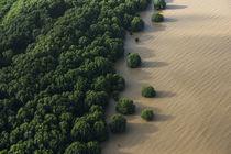 Mangroves by Danita Delimont