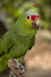 Central America, Honduras, Roatan, Roatan Butterfly Garden, ... von Danita Delimont