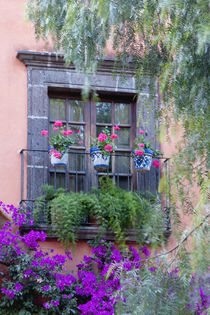 San Miguel de Allende, Window with geraniums and bougainvillea by Danita Delimont