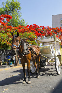 Horse and carriage, Guadalajara, Jalisco, Mexico by Danita Delimont