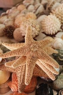 Dried sea stars sold as souvenirs von Danita Delimont