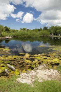 Cozumel Cenote by Danita Delimont