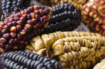 Various types of corn Peru. by Danita Delimont