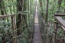 Suapension Bridge, Amazon Natural Park by Danita Delimont
