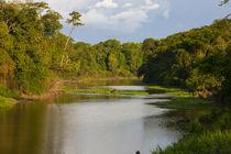 Yurapa River, Puerto Miguel, Peru von Danita Delimont