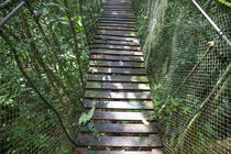 Suspension Bridge in the Jungle by Danita Delimont