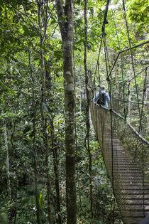 Suspension Bridge in Amazon Natural Park by Danita Delimont