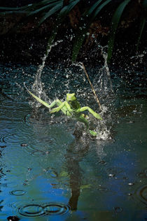 Green basilisk or plumed basilisk running on water, Costa Rica by Danita Delimont