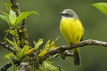 Costa Rica, Arenal by Danita Delimont