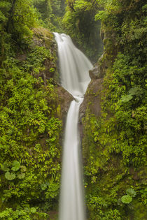 Costa Rica, Monteverde Cloud Forest Biological Reserve von Danita Delimont