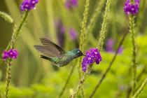 Central America, Costa Rica, Arenal by Danita Delimont