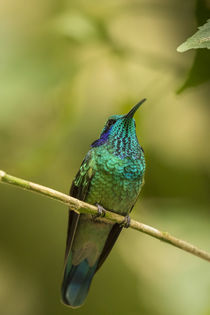 Central America, Costa Rica, Monteverde Cloud Forest Biologi... by Danita Delimont
