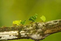 Central America, Costa Rica, Monteverde Cloud Forest Biologi... von Danita Delimont