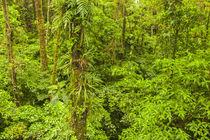 Central America, Costa Rica, Arenal von Danita Delimont