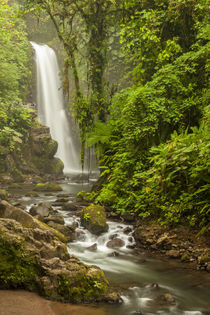 Central America, Costa Rica by Danita Delimont