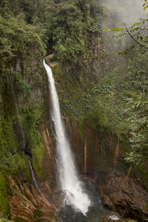 Toro Falls, cloud forest, Costa Rica by Danita Delimont
