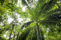 Inside rainforest, Selva Verde, Costa Rica by Danita Delimont