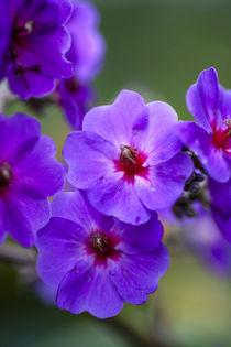 Purple flower von Danita Delimont